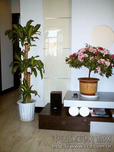 绿色植物装扮客厅死角的点睛之笔(图)